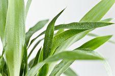 Free Plant, Leaf, Grass, Plant Stem Royalty Free Stock Photography - 101704207