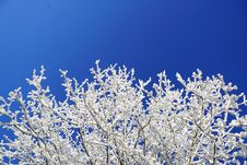Free Blue, Winter, Frost, Sky Royalty Free Stock Image - 101704286