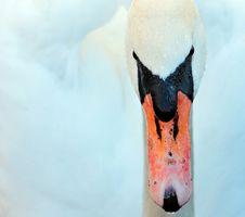 Free Water Bird, Beak, Bird, Ducks Geese And Swans Stock Images - 101742084