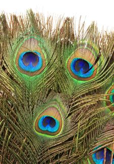 The Peacock Fan (fragment) 1 Stock Photography