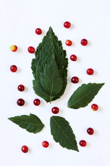 Leaves And Fruits Arrangement Royalty Free Stock Photo