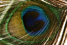 Free The Peacock Eye Macro Stock Images - 10180424