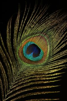 The Peacock Eye 3 Royalty Free Stock Image