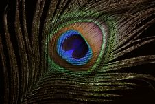 Free The Peacock Eye 4 Stock Images - 10180444