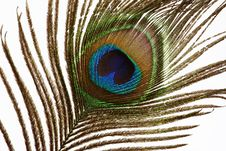 The Peacock Eye 2 Stock Image