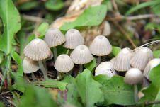 Free Forest Mushroom Royalty Free Stock Photos - 10181518