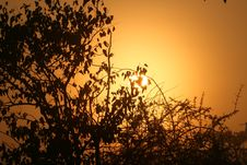 Free Sunset At Kruger Royalty Free Stock Photography - 10182027