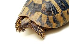Free Turtle Stock Photography - 10183252