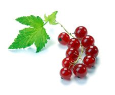 Free Red Currant Stock Photos - 10183903