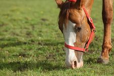 Free Grazing Horses Stock Image - 10184801