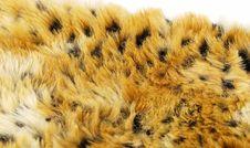 Leopard Pattern Royalty Free Stock Photo