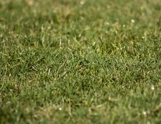 Free Green Grass Stock Images - 10186054