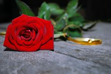 Free Lonely Rose... Royalty Free Stock Images - 10187279