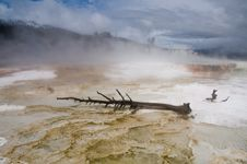 Free Mammoth Hot Springs, Yellowstone Stock Photo - 10187670