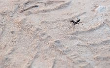 Free Ant On The Tracks Royalty Free Stock Photos - 10187898