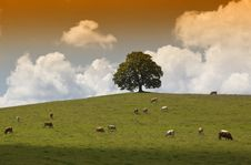 Free Nature - Tree, Meadow, Cow Stock Images - 10189924
