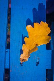 Free Fall Oak Leaves On Blue Stock Photo - 101841560