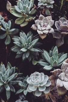 Free Botanical, Cactuses, Close-up, Colors Stock Images - 101842084