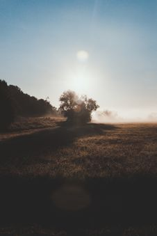 Free Lonely Tree In The Morning Light Stock Images - 101842244