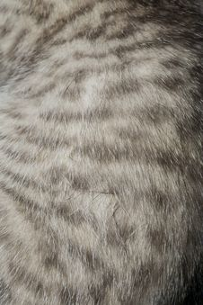 Free Striped Tabby Cat Fur Macro Royalty Free Stock Photos - 101844178