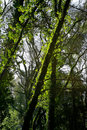 Free Beautiful Landscape Forest Stock Photography - 10196132