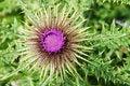 Free Wild Flower Stock Photography - 10197832