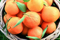 Free Tangerines Royalty Free Stock Photo - 10199825