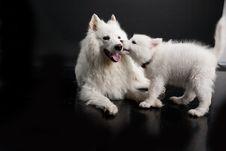 Free Husky Royalty Free Stock Photos - 10190208