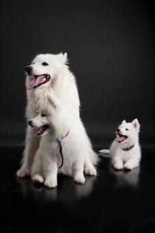 Free Husky Stock Photo - 10190410
