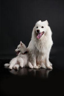Free Husky Family Royalty Free Stock Photos - 10190458