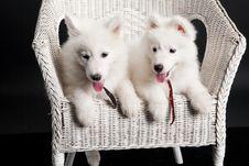 Free Husky Stock Photos - 10190633