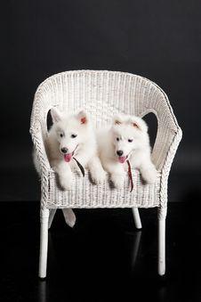 Free Husky Stock Photos - 10190683