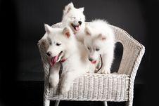 Free Husky Royalty Free Stock Photography - 10190817