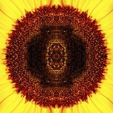 Free Beautiful Sunflower Stock Photos - 10191983