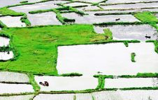 Farmers Are Working On Rice Field, China Royalty Free Stock Photos