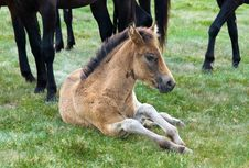 Young Horse Colt Stock Photos
