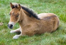 Young Horse Colt Stock Photo