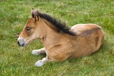 Young Horse Colt Stock Image
