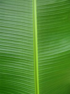 Free Green Leaf Royalty Free Stock Photography - 10195287