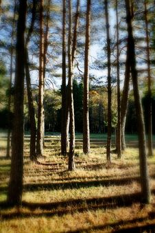 Free Quiet Landscape Forest Royalty Free Stock Photos - 10195538