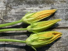 Free Courgettes Or Zucchinis Flowers Royalty Free Stock Photos - 10195868