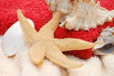 Starfish And Seashells On Towel Background Royalty Free Stock Photography