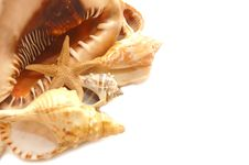 Seashell On White With A Lot Of Copy Space Stock Photo