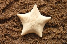 Free Starfish On A Beach Sand, Perfect For Background Stock Photography - 10196272