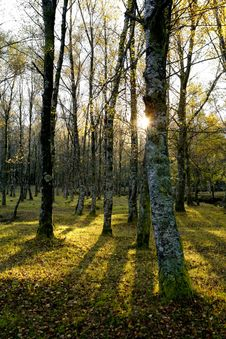 Free Magic Forest Stock Photography - 10196432