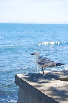 Free Gull Sitting On Pier Royalty Free Stock Image - 10199296