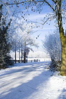Free Snowy World. Royalty Free Stock Photo - 10199615
