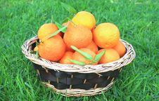 Free Tangerines Royalty Free Stock Photos - 10199808