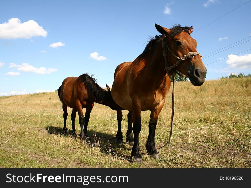 Mare And Her Young