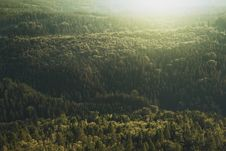 Free Conifer, Daylight, Evergreen, Forest, Stock Photography - 101909312